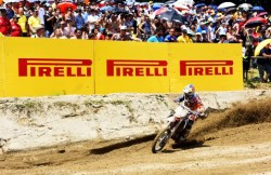 600_mx12_herlings